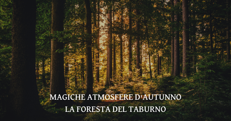 Foresta del Taburno