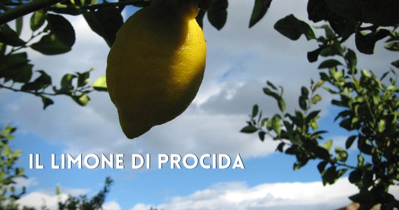 limone di procida